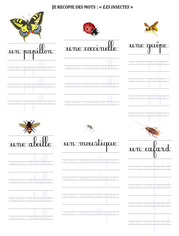 Exercice D Ecriture Cursive Cp Je Recopie Les Mots Les Insectes