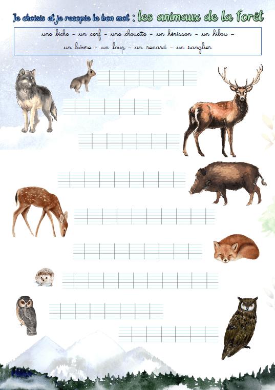 """Illustration de l'exercice : """"Je choisis et je recopie le bon mot : les animaux de la forêt"""""""